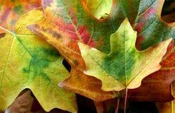 Inzameling van de herfstbladeren stock foto
