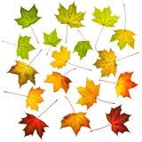 Inzameling van de herfstbladeren Royalty-vrije Stock Afbeeldingen