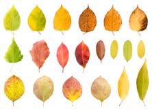 Inzameling van de herfstbladeren in verschillende stades van het vernietigen Stock Fotografie