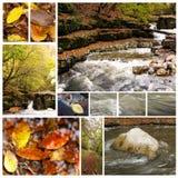 Inzameling van de herfstfoto's Royalty-vrije Stock Fotografie
