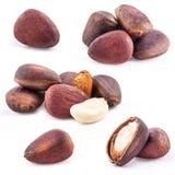Inzameling van de noten van de Pijnboom stock foto's