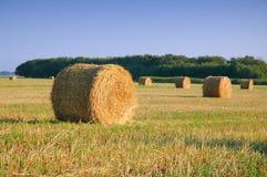 Inzameling van de oogst stock foto's
