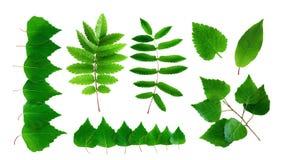 Inzameling van de zomer groene die bladeren en takken op een witte achtergrond worden geïsoleerd stock afbeeldingen