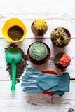 Inzameling van diverse bloeiende cactusinstallaties, het tuinieren handschoenen, potting grond en troffel op witte houten achterg stock afbeeldingen