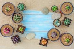 Inzameling van diverse cactusinstallaties in verschillende potten op blauwe achtergrond stock foto's