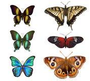 Inzameling van diverse die soorten vlinders, op witte bedelaars worden geïsoleerd Royalty-vrije Stock Afbeelding