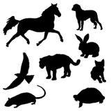 Inzameling van diverse dierlijke silhouetten in vector Stock Afbeeldingen