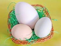 Inzameling van eieren, groot wit gansei, lichtgroen eendei, Stock Afbeeldingen