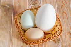 Inzameling van eieren, groot wit gansei, lichtgroen eendei, Royalty-vrije Stock Afbeeldingen