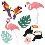 Inzameling van exotische tropische vogels In vectorillustraties Kan als elementen voor prentbriefkaar, banner, kaart worden gebru stock illustratie
