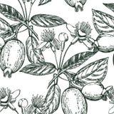 Inzameling van feijoafruit, bloem, bladeren en feijoaplak Vector hand getrokken illustratie stock illustratie