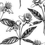 Inzameling van feijoafruit, bloem, bladeren en feijoaplak Vector hand getrokken illustratie vector illustratie