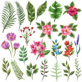 Inzameling van flowera en bladeren Stock Foto