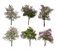 Inzameling van Geïsoleerde bomen met purpere bloemen op witte backgroud Royalty-vrije Stock Fotografie