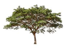 Inzameling van geïsoleerde bomen op een witte achtergrond De mooie boom het is geschikt voor gebruik in het verfraaien, het verfr royalty-vrije stock foto's