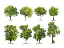 Inzameling van geïsoleerde bomen op witte achtergrond Royalty-vrije Stock Foto's