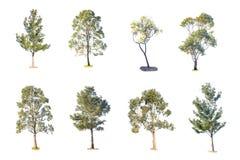 Inzameling van geïsoleerde bomen op witte achtergrond Stock Foto