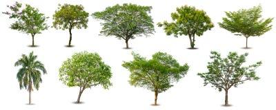 Inzameling van Geïsoleerde Bomen op witte achtergrond, Reeks groene die bomen op witte achtergrond wordt geïsoleerd royalty-vrije stock fotografie