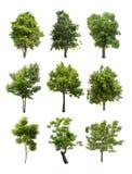 Inzameling van Geïsoleerde bomen op witte backgroud Royalty-vrije Stock Afbeelding