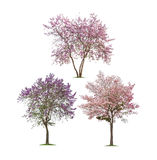 Inzameling van Geïsoleerde bomen witte achtergrond Stock Afbeeldingen
