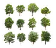 Inzameling van geïsoleerde boom op witte achtergrond Stock Foto