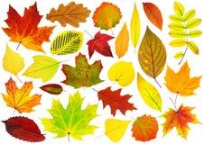 Inzameling van geïsoleerde de herfstbladeren Stock Afbeelding