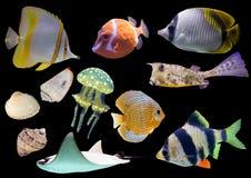 Inzameling van geïsoleerde vissen en shells Royalty-vrije Stock Afbeeldingen