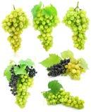 Inzameling van geïsoleerdeg druivenclusters stock foto