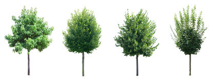 Inzameling van geïsoleerdex bomen stock fotografie