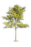Inzameling van geïsoleerdex bomen Royalty-vrije Stock Afbeeldingen