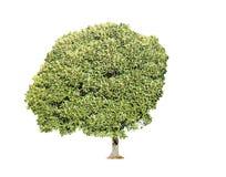 Inzameling van geïsoleerdex bomen Royalty-vrije Stock Fotografie