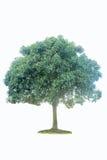 Inzameling van geïsoleerdex bomen Stock Foto
