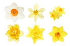 Inzameling van gele narcisbloemen stock afbeeldingen