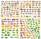 Inzameling van geïsoleerde Vruchten en groente Stock Foto's