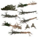 Inzameling van gevallen bomen en boomstompen Royalty-vrije Stock Fotografie