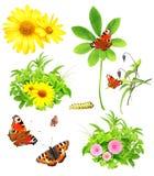 Inzameling van groene bladeren, bloemen en insecten Stock Foto