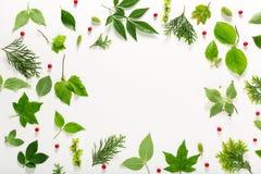 Inzameling van groene bladeren hoogste mening royalty-vrije stock afbeelding