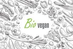 Inzameling van hand-drawn groenten vector illustratie