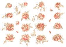Inzameling van hand-drawn rozen royalty-vrije illustratie