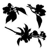 Inzameling van het silhouet van bloesem aplle bloemen Stock Foto