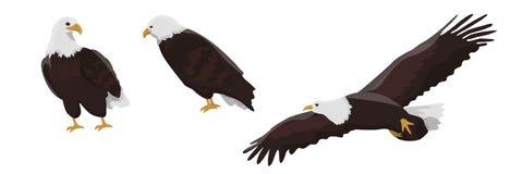 Inzameling van het vliegen van en het zitten van kale adelaars vector illustratie