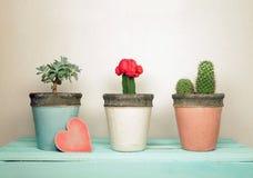 Inzameling van houseplants met houten hart stock afbeelding