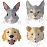 Inzameling van huisdierenhoofden Stock Foto