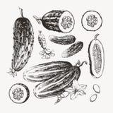 Inzameling van inkt getrokken komkommers Stock Foto's