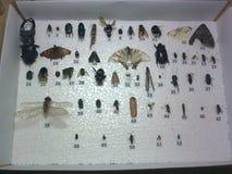 Inzameling van insecten Stock Afbeelding