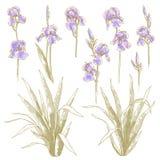 Inzameling van irisbloemen Royalty-vrije Stock Foto's