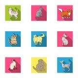 Inzameling van katten in één beeld Verschillende katten in één beeld Het pictogram van kattenrassen in vastgestelde inzameling op Stock Afbeelding