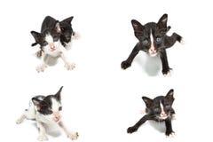 Inzameling van kattenbeelden stock foto