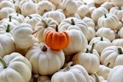 Inzameling van Kleine Witte Pompoenen met Één Kleine Oranje Pompoen royalty-vrije stock foto's