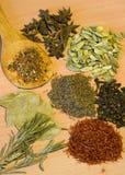 Inzameling van kruiden Stock Afbeelding